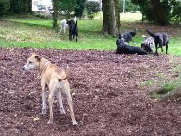 Aire d'ébats pour chiens au parc de l'Épinette :  #Libourne dogfriendly !